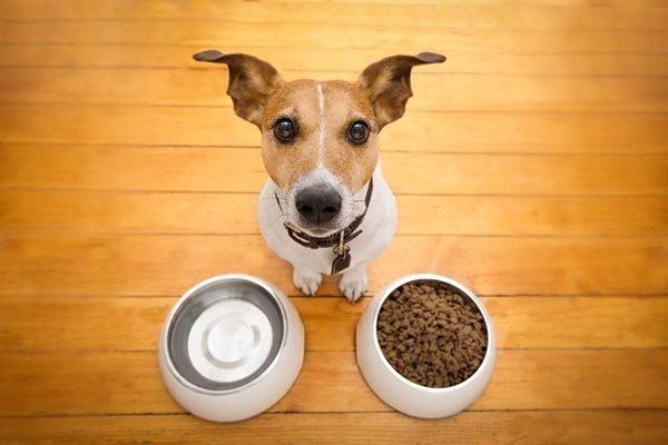 Suns negrib ēst